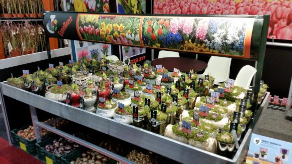 'Trade Fair' Aalsmeer 2016