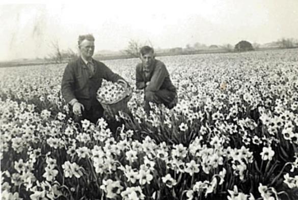 Blütenköpfe in Korben