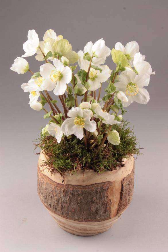 Natuurlijke houten pot & schaal