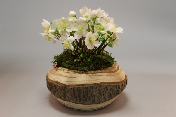 Natural wood pot & dish