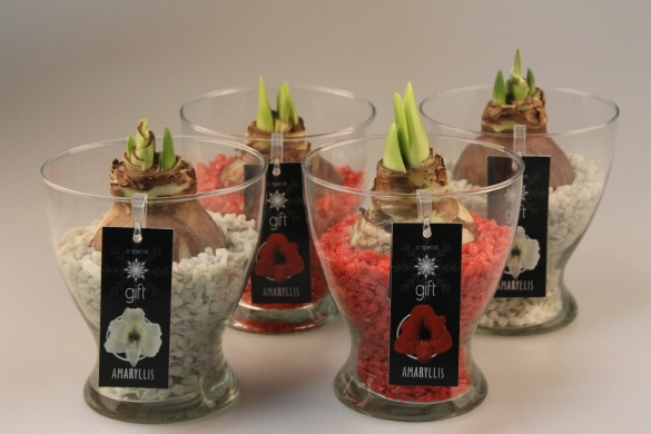 Tealight holder with amaryllis or hyacinth