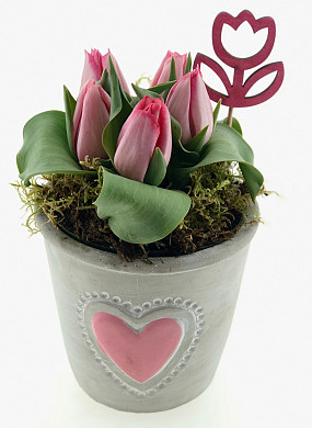 12cm pot tulp valentijn